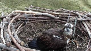 Mrs G in the nest in April