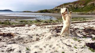 Casper on Gigha