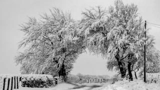 Snow-covered trees in arch over a road