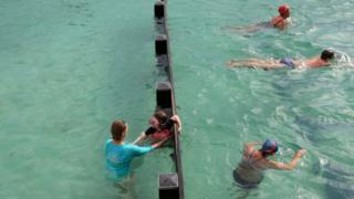 plivači u Sidneju