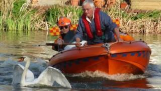 Swan being rescued