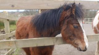 Teddy was abandoned in Swansea - and is now looked after by a horse charity