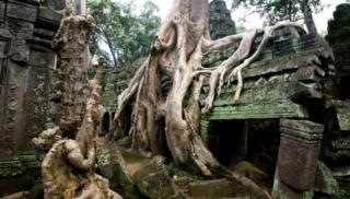 Árboles y raíces tomaron el templo de Ta Prohm en Camboya.