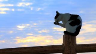 Кошка на заборе