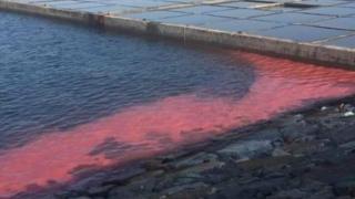Dải nước đỏ lạ xuất hiện ở vùng biển Vũng Áng