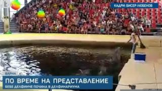 Dolphins during a performance at Varna dolphinarium