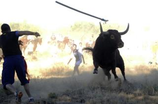 A participant throws a spear at a bull during the 'Toro de la Vega' festival (Sept 2013)