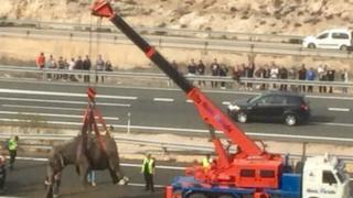 a crane lifts injured elephants from the motorway in Pozo Cañada near Albacete in the Murcia region in the south-east of Spain on 2 April 2018