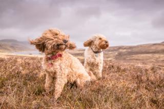Oscar and Roo on Skye