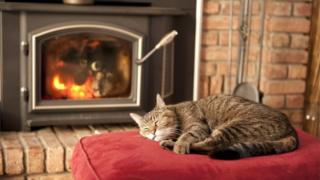 cat in front of wood burning stove