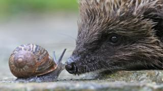 Snail and hedgehog