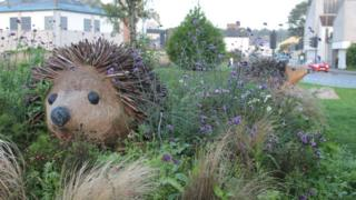 Hedgehogs on roundabout