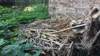 The empty swan nest at The Bishop's Palace
