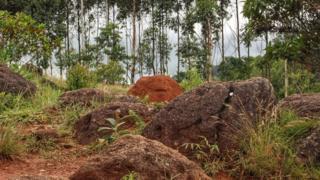 Термитник в Бразилии