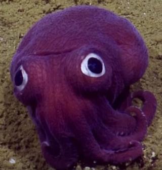 Animal roxo encontrado no oceano