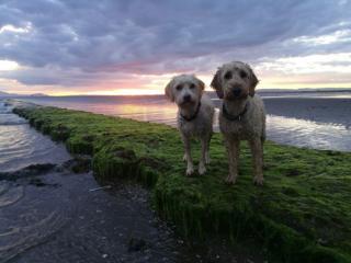 Velma and Bertie enjoying the sunset on Barassie beach, Troon