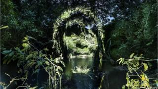 Лицо, спроецированное на деревья Амазонии