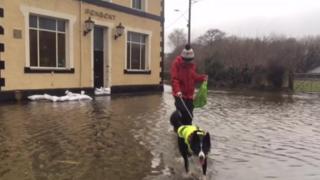 A dog walker braves the rain and flood water in Llanrug, Caernarfon