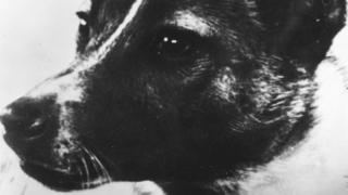 Laika, the dog used to relay biomedical information in the Soviet 'Sputnik II' outer-space investigation programme