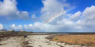 Dog and rainbow on South Uist beach