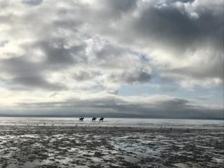 Horses in water near Burntisland