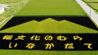 Перший малюнок на рисовому полі