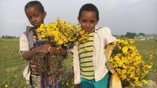 Ijoollee keelloo qabatte, Fichee, Salaalee, Oromiyaa