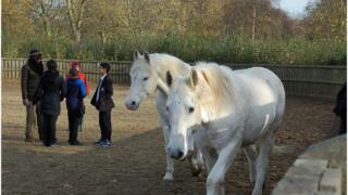 Children and horses in Hyde Park