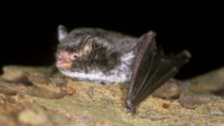 bat-sitting-on-a-log.