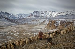 A shepherdess with her goats travels across a mountainous region