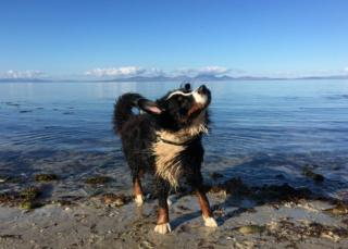 dog in water at Kintyre