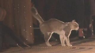 """بالفيديو: قطة تقتحم عرض دار """"كريستيان ديور"""" في مراكش"""