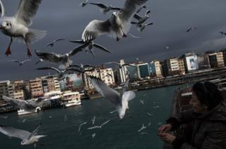 A woman feeds seagulls from a ferry.