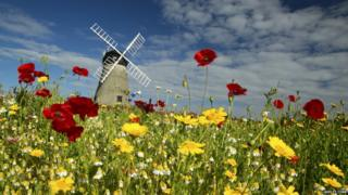Bright flowers in a meadow with a windmill