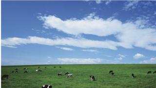 Cows in field with big sky