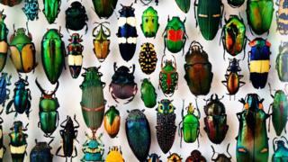 Image of a range of colourful bugs