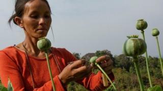 UNODC စစ်တမ်းမှာတော့ ကချင်ပြည်နယ်မှာ ဘိန်းစိုက်ပျိုးမှု ထုတ်လုပ်မှု ပမာဏ အမြင့်ဆုံးဟာ ကေအိုင်အေ ထိန်းချုပ်တဲ့ဒေသ ဖြစ်တယ်လို့ ထုတ်ပြန်ထား