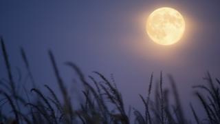قمر الحصاد