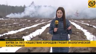 Belarus state TV report on bark beetle forest infestation
