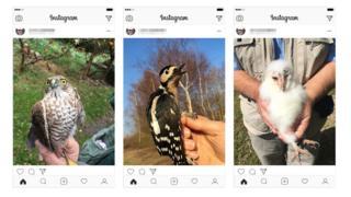 science Jim Todd's Instagram posts of birds