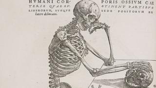 5 partes do nosso corpo que até pouco tempo não sabíamos que existiam