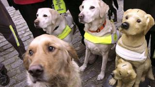 Guide dogs standing next to a charity box