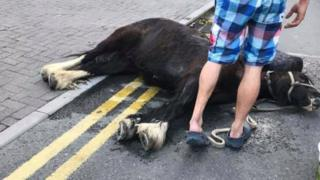 A collapsed horse on Westgate Street, Cardiff