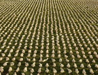 The Shrouds of the Somme installation