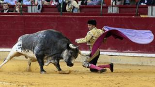 Spanish bullfighter Alberto Alvarez fights against his first bull during the El Pilar Fair bullfight in Zaragoza, Spain, 9 October 2016