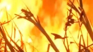 Fuego en el Amazonas