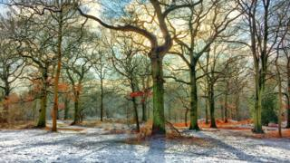 Snow and sunlight in Brasenose Woods