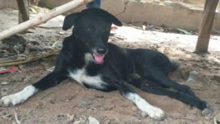الكلب بينغ بونغ
