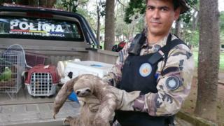 Bicho-preguiça é resgatado por PM