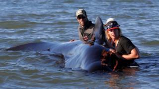 волонтеры и кит